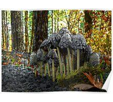 Stick Close ~ Shaggy Mane Mushroom ~ Poster