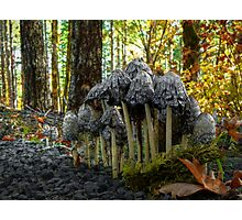 Stick Close ~ Shaggy Mane Mushroom ~ Photographic Print