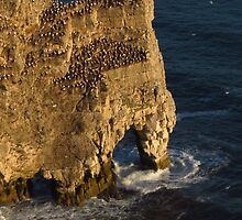 Rock Arch, Bempton Cliffs, Yorkshire by wiggyofipswich