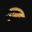 SuperMoon at Torquay by Andy Berry
