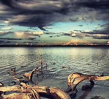driftwood by stelio