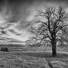 A Bare Tree Stands..... by Simon Brown