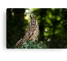 Long Eared Owl with Friend Canvas Print