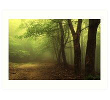Green natural forest with fog Art Print