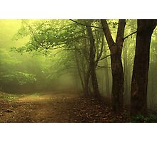 Green natural forest with fog Photographic Print