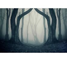 Haunted Halloween forest with fog Photographic Print