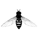 Flying Bee - insect illustration by Linn Warme
