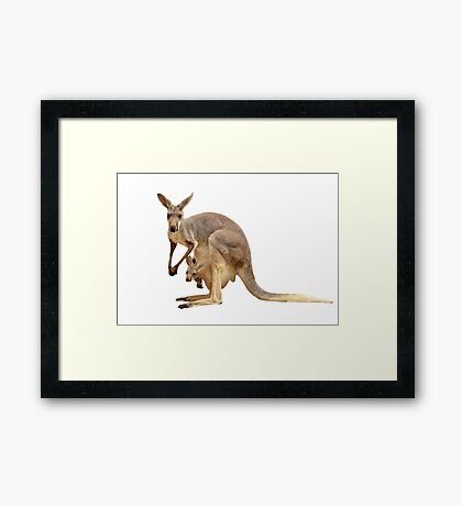 Kangaroo mom Framed Print