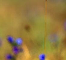 Pastel Grass -Bokeh with Jupiter 9 Vintage Lens by rennaisance