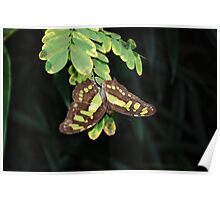 Green and pretty butterfly Poster
