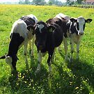 Young Cows between the Flowers by ienemien