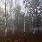 Birch Trees In The Fog by Debbie Oppermann