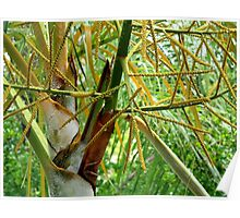 Palm tree foliage with raindrops Poster