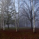 Fall Walk In The Fog by Debbie Oppermann