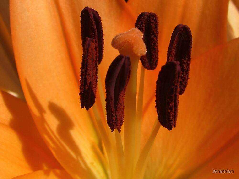 Stamen and Pollen in Orange by ienemien