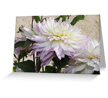 Creamy Dahlia With Lavender Fringed Petals Greeting Card