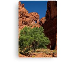 The Tree and the Window Canvas Print