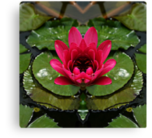 In the pond of reflection Canvas Print