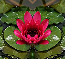 In the pond of reflection by Scott Mitchell