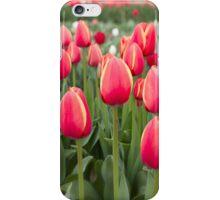 Tulips fields  iPhone Case/Skin