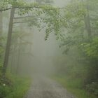 foggy lane by dc witmer