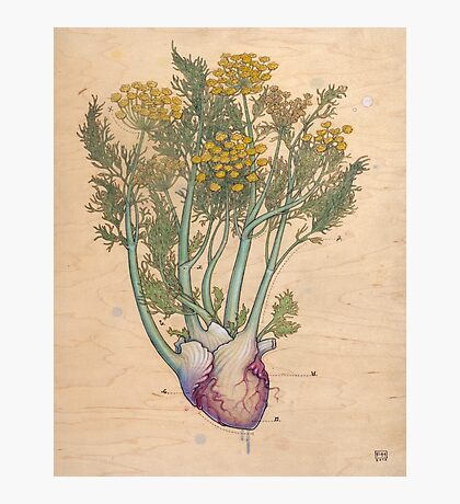 Fennel Heart Photographic Print