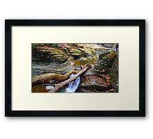 Fallen Trees Framed Print