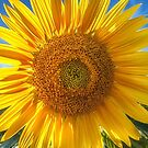 In Your Face Sunny by Owed to Nature