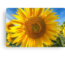 In Your Face Sunny Canvas Print