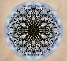 Cottonwood Mandala 4 by Gail S. Haile