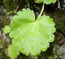 Green Leaf by jmethe