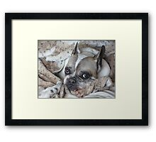 Furghy in Fur Framed Print