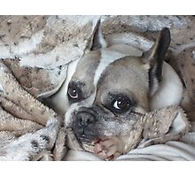 Furghy in Fur Photographic Print