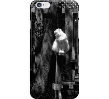 White Cat On Bench Black & White iPhone Case/Skin