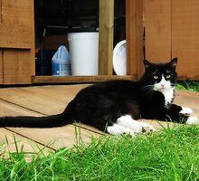Tuxedo Cat by BonnieToll