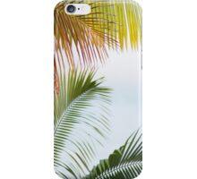 Palms: Hilo, Hawai'i iPhone Case/Skin