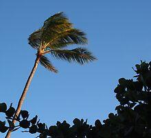 Sway: Honolulu, Hawai'i by Sally Kate Yeoman
