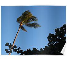 Sway: Honolulu, Hawai'i Poster