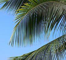 Palms: Kona, Hawai'i by Sally Kate Yeoman
