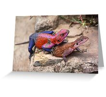 East African Rainbow Agama Lizards Mating Greeting Card