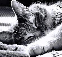 Sleeping Cat by BonnieToll