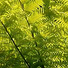 On the Fern Side by AnnDixon