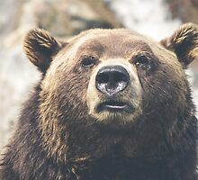 Bear by Lost & Found