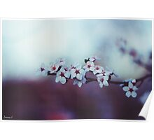 Lovely Blossoms Poster