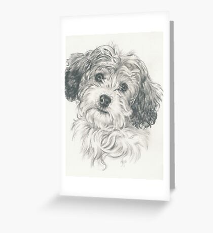 Another Cavachon  Greeting Card
