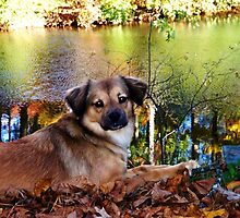 Enjoying Autumn by Terri~Lynn Bealle