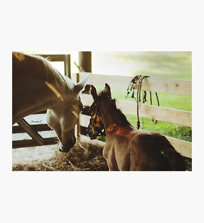 Mare and Foal Photographic Print