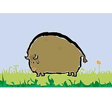 big brown bison Photographic Print