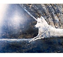 Wolf in the Light Photographic Print