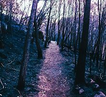 purple fire by zeebachi